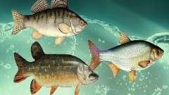 Nuevos peces (agua dulce)